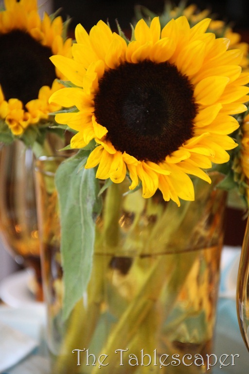 sunflowers 009
