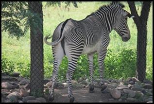Zoo5 052