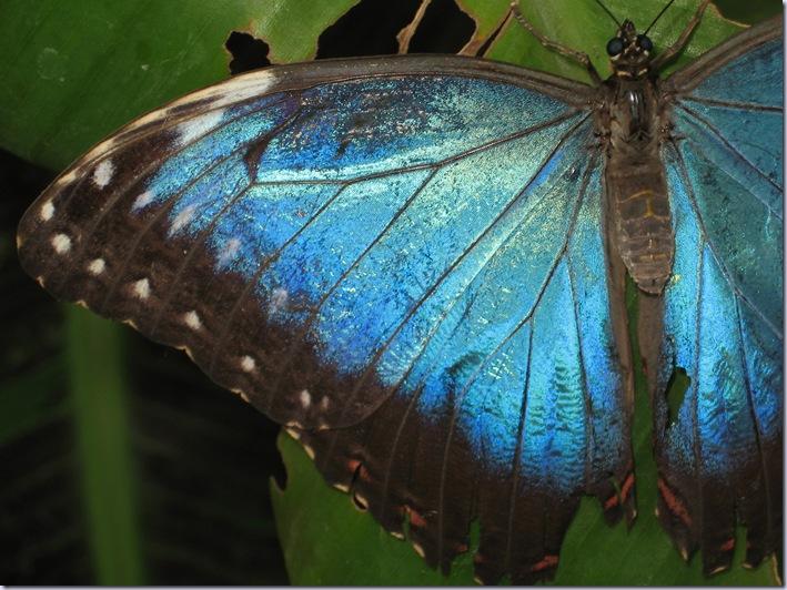 Farfalle 058