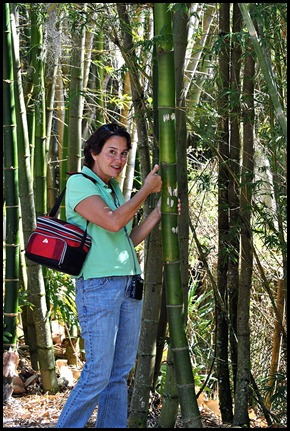 25 - Tricia checking out the huge bamboo
