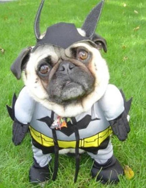 Gatos_caes_Batman07