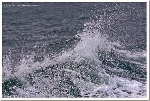 140325_Monterey_0111