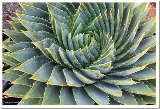 130927_SucculentGardens_055_thumb