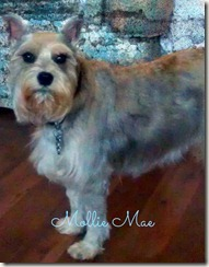 Mollie Mae 02-11