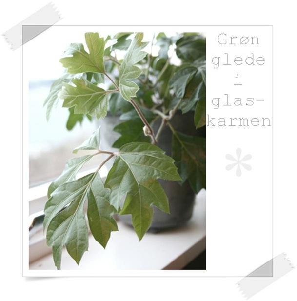 grøn glede3