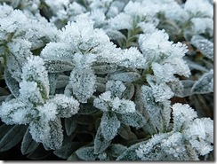 frosty clusters