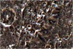 Iapetus lua solo