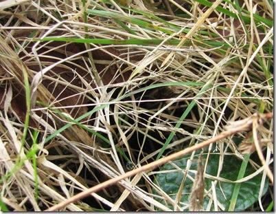 20120225 Metre grass b
