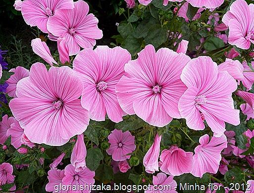 Glória Ishizaka - Minha flor 1