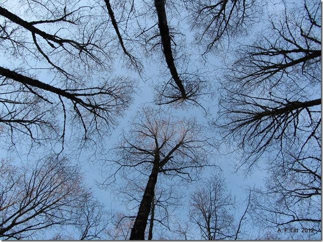 Butler Creek Greenway Trail.  Gresham, Oregon.  February 15, 2012.  Photo of the Day, February 17, 2012.