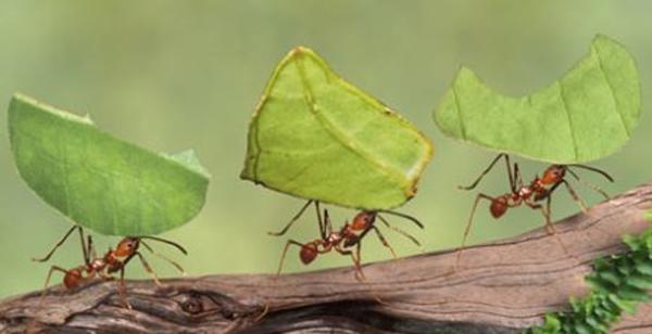 coup de pied dans fourmilière