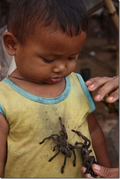 spider-food-cambodia-6