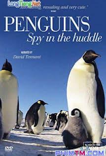 Cuộc Sống Chim Cánh Cụt Bắc Cực - Penguins: Spy In The Huddle