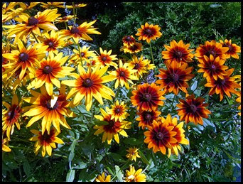 03d1 - Bar Harbor - Beautiful Flowers