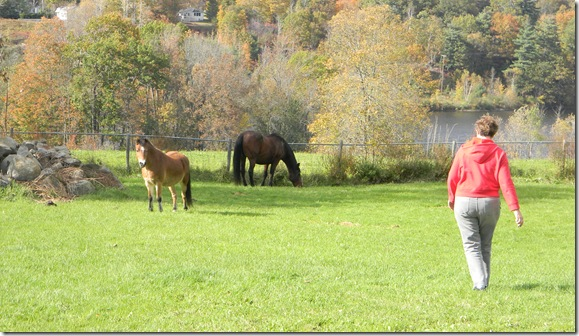 Fall at Jean's with horses. 093