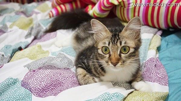 Kucing Nisakay 3