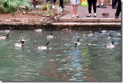 RiverWalk San Antonio (15)