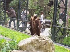 2014.04.21-027 vautour