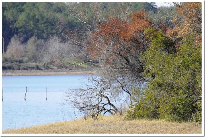 Birds-Martin Lake 061 small