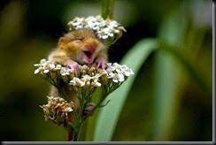 Awwwww-Flowers
