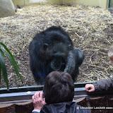 Heidelberger-Zoo_2012-04-09_811.JPG