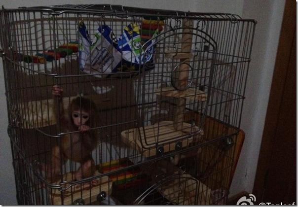 Macaco bebe adora tomar refrigerante (7)