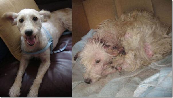 Animais Antes e Depois do Resgate (4)