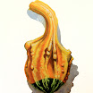 la colocinthe