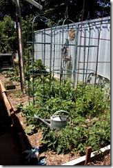 Sunday in the garden 005