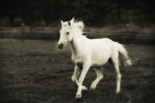 i-pony