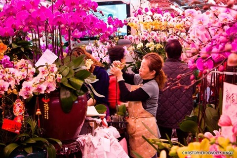 orchids on sale for chinese new year in Hong Kong