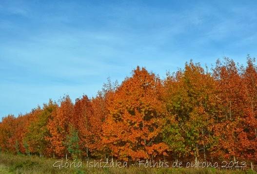 Glória Ishizaka - Folhas de Outono 13