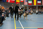 20130510-Bullmastiff-Worldcup-1096.jpg