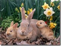 conejos pascua (67)