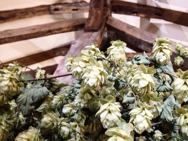 Hops at Shepherd Name