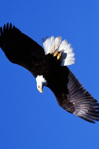 Soaring-liberty