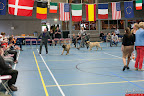 20130510-Bullmastiff-Worldcup-0909.jpg