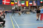 20130510-Bullmastiff-Worldcup-0909.jpg