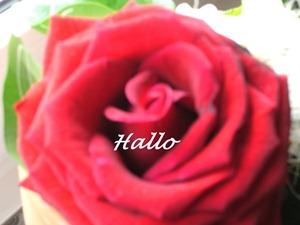 Hallo E