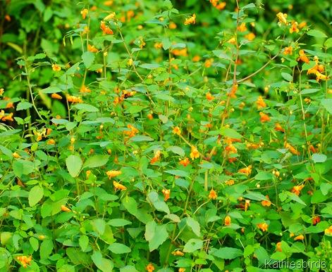 3. flowers-kab