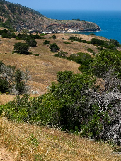 Channel Island NP Santa Cruz Island Pelican Bay Hike (29)
