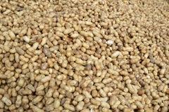 peanuts 030