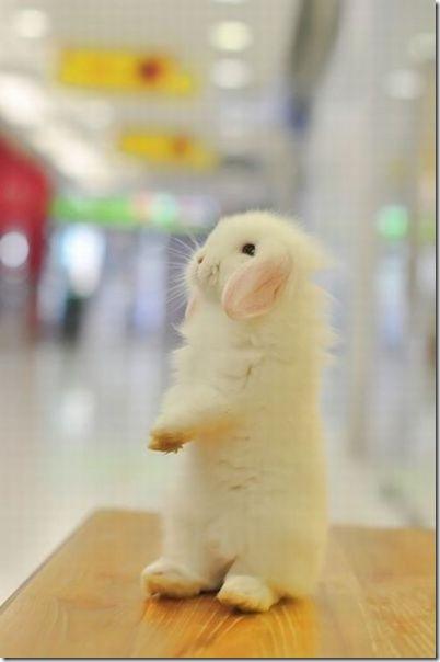 cute-funny-animals-2