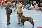 20130511-BMCN-Bullmastiff-Championship-Clubmatch-2262.jpg
