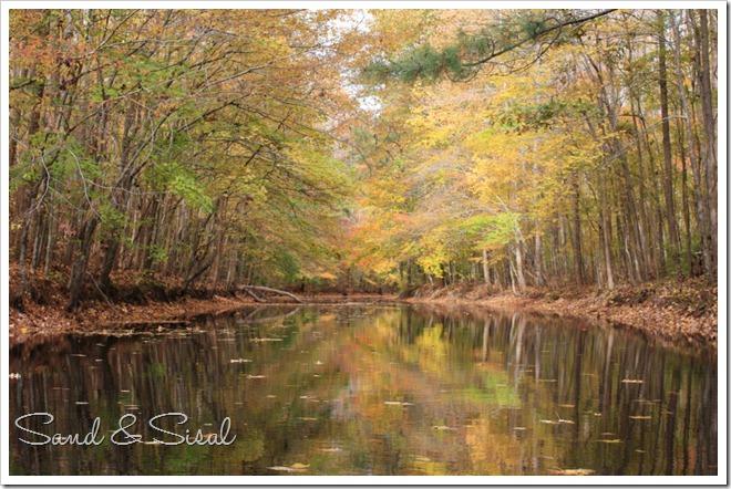 foliage like impressionism (1024x675)