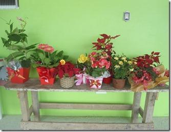 Amigo Flores Servas3