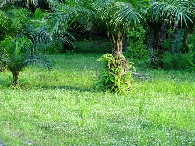 Forêt équatoriale (7)