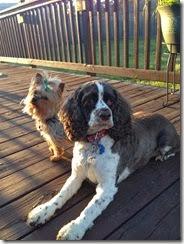Dogs Enjoying Sunshine