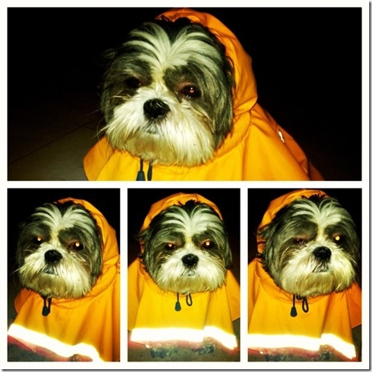 hurricane-sandy-dogs-1