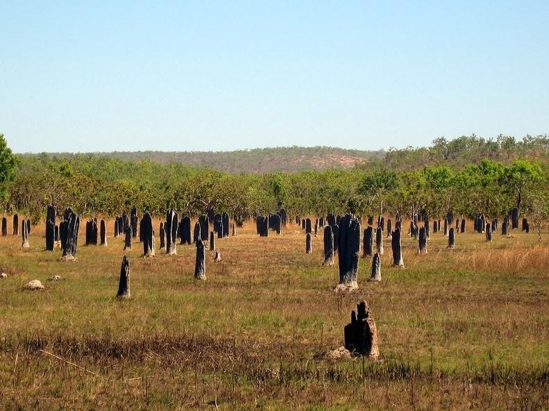 magnetic-termites-7